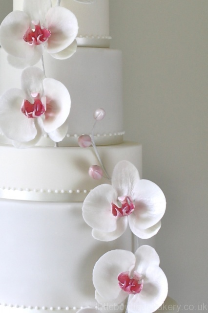 orchid_c